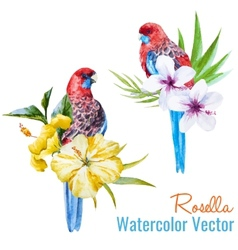 Tropical birds vector