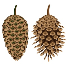 Two pine cones vector