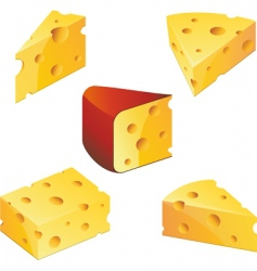 cheese collection vector image