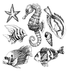Fish sea horse marine life hand drawn set sea life vector