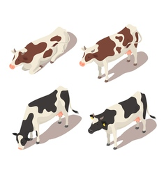 Isometric 3d set of cows vector