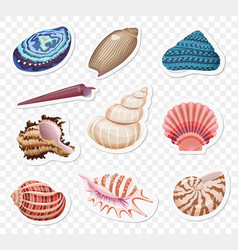Realistic sea shells stickers sset on the vector