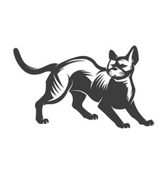 cat isolated on white backgroun vector image