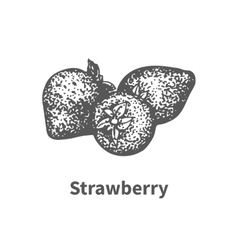hand-drawn strawberry vector image vector image