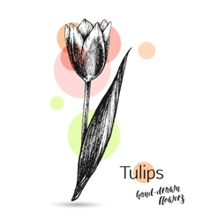 Tulips flower for wedding or birthday card vector