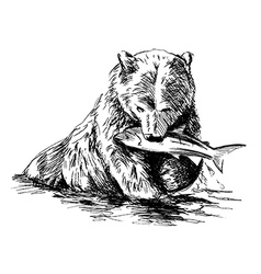 Hand sketch bear catching fish vector