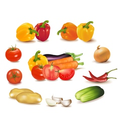 Colorful group of vegetables vector