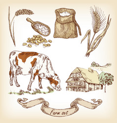 hand drawn of cow vector image