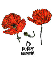 poppy flowers design elements vector image vector image