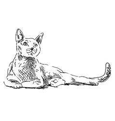 Hand sketch cat vector image