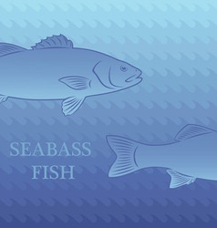 Fish labrax vector