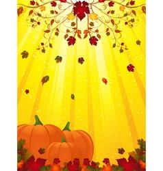pumpkins vector image