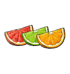 quarter piece of orange grapefruit lime hand vector image vector image