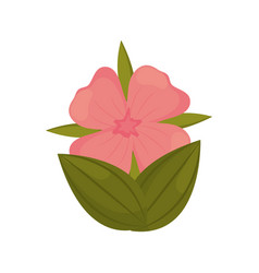 Geranium flower bud with leaves vector