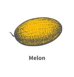Hand-drawn single juicy ripe yellow melon vector