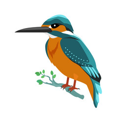 kingfisher flat design vector image vector image