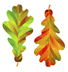 Two autumn oak leaves isolated on white vector