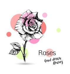 Roses flower for wedding or birthday card vector
