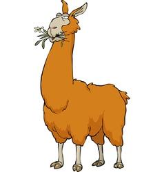 chewing llama vector image vector image