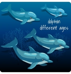 Four dolphins with space for text vector image