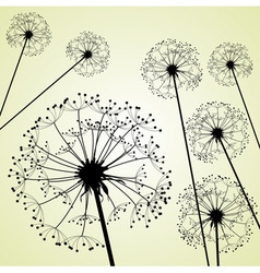 dandelions pale green vector image vector image