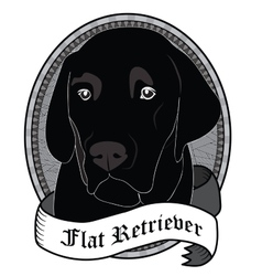 Flat retriever portrait isolated dog vector