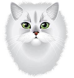 Cat chinchilla vector