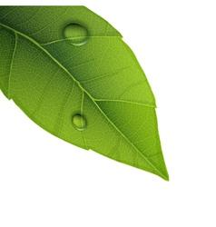water droplets on leaf vector image