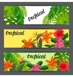 Banners with stylized tropical plants leaves and vector