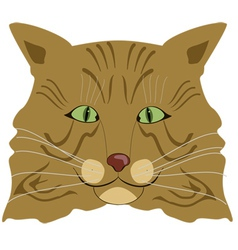 cat face vector image vector image