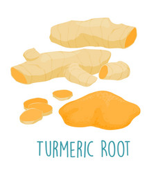 Fresh turmeric root on white background vector