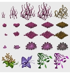 Big set variety grasses and underwater corals vector