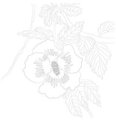 contour hibiscus for colori vector image