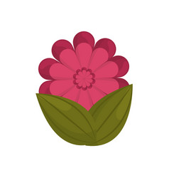 gerbera flower bud with leaves vector image