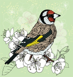 Goldfinch at the cherry blossoms vector