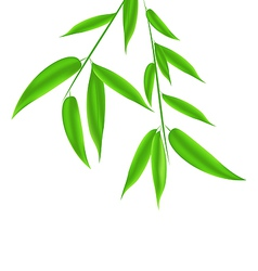 Bamboo leaves pattern with space for your text vector image