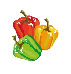 Sweet paprika bell pepper in three colors vector