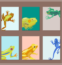 frog cartoon tropical animal cartoon nature cards vector image