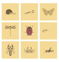 assembly flat bug snail butterfly vector image