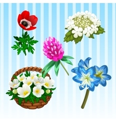 Five different flower types single and bouquet vector