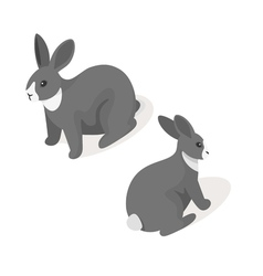 Isometric 3d of grey rabbit vector image vector image