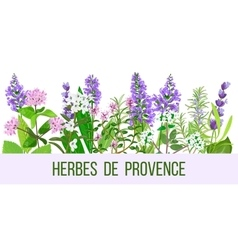 Stylized herbal backgrounds in wide-screen format vector
