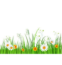 Green nature border with grass and flower vector