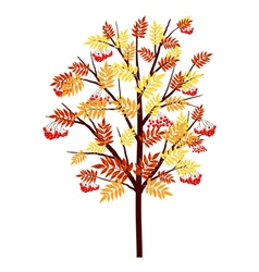 Autumn rowan tree vector