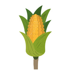 White background with corn cob with leaves and vector