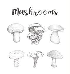 mushroom set sketch hand vector image