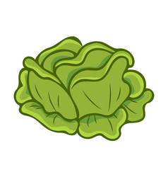 Green cabbage cartoon isolated vector