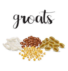Groats rice buckwheat oatmeal millet set vector