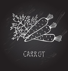 Hand drawn carrots vector