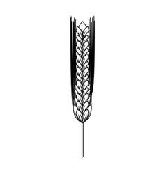 ear of barley natural vector image vector image